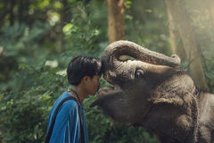 Kiss me. The expression of love of elephants and mahouts are lovely royalty free stock photos