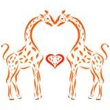 Kiss of orange giraffes in love.  Stock Photo