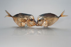 Kiss, photo joke: two smoked fish kissing in the mouth on a white background. Kiss, photo joke: two smoked sea fish kissing in the mouth on a white background Royalty Free Stock Photo