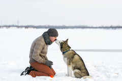 Kiss Siberian huskies Royalty Free Stock Image