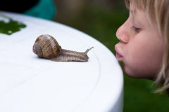 Kiss snail Royalty Free Stock Photo