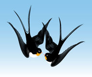 Kiss swallows Royalty Free Stock Images
