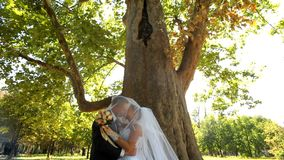 Kiss Under The Long-Term Tree stock footage