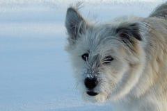 kisser de la nieve fotografía de archivo