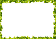 Leaves frame border  Royalty Free Stock Photos