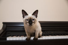Kisset ska just att hoppa av pianot Royaltyfri Fotografi