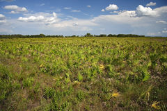 Kissimmee Prairie Preserve Stock Image