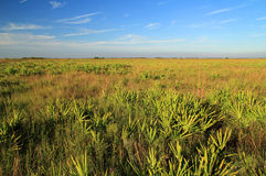 Kissimmee Prairie Preserve. State Park, Florida Royalty Free Stock Image