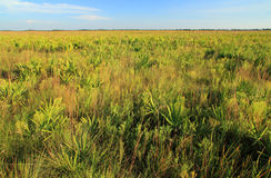 Kissimmee Prairie Preserve Royalty Free Stock Photos