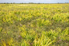 Kissimmee Prairie State Preserve Stock Photo