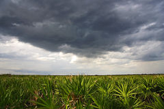 Kissimmee Summer Storm Stock Images