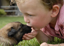 Kissing baby. Little boy kissing his very young puppy purebred belgian shepherd malinois Royalty Free Stock Images