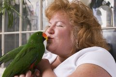 Kissing bird. Tame parrot getting kissed on beak Royalty Free Stock Images