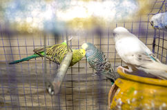 The kissing birds Stock Photography