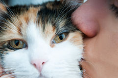 Kissing the cat Royalty Free Stock Image