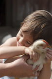 Kissing chicken Royalty Free Stock Photography