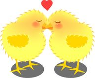 Kissing chicks. Vector illustration for a pair of kissing chicks, cartoon Royalty Free Stock Image