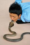 Kissing Cobra Stock Photos