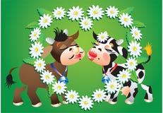 Kissing Cows and camomile border. Cartoon kissing cows and heart camomile border Stock Photo