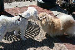 Kissing Dogs S605 Royalty Free Stock Images