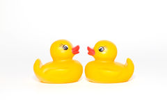 Kissing ducks Royalty Free Stock Photography