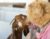 Kissing goat Stock Photos