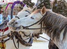 Kissing horse Royalty Free Stock Photos