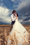 Kissing just married bride and groom in wheat field Royalty Free Stock Image