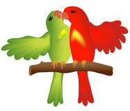 Kissing lovebirds. A pair of kissing parrots Royalty Free Stock Images