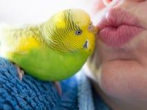 Kissing a paratkeet. Stock Photography