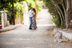 Kissing people at the background of walking cat Stock Photography