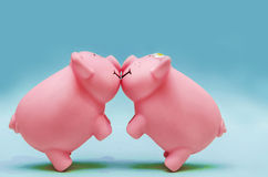 Kissing Pigs Royalty Free Stock Photography