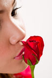 Kissing a red rose Stock Image