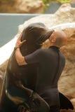 Kissing sealion Stock Photo