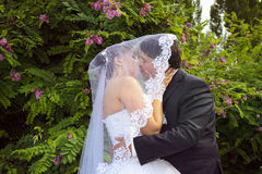 Kissing Under bride`s veil Stock Photography