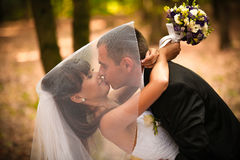 Kissing under veil Stock Image