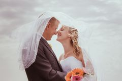 Kissing wedding couple in high grass Stock Photography