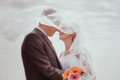 Kissing wedding couple in high grass Royalty Free Stock Photography