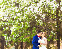 Kissing wedding couple in spring nature Royalty Free Stock Photography