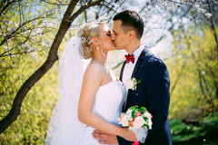 Kissing wedding couple in spring nature close-up portrait. Kissi. Ng wedding couple in spring nature close-up portrait outdoor in blooming spring garden Royalty Free Stock Image