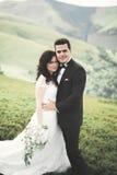 Kissing wedding couple staying over beautiful landscape Royalty Free Stock Image