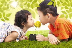 Kissing yellow flower together in park royalty free stock images
