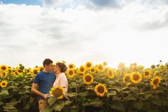 Kissing young couple portrait on sunflowers field. A love story. Space for text stock photography