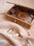 Kist met zeeschelpen stock afbeeldingen