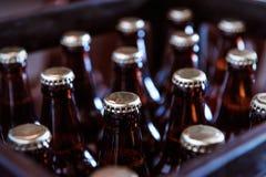 Kiste frisch abgefülltes Bier Stockbilder