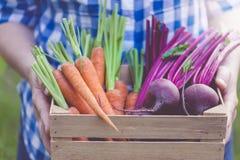 Kiste voll frisches organisches Gemüse in Frauen ` s Händen lizenzfreies stockfoto