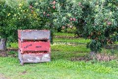 Kisten Äpfel im Obstgarten lizenzfreies stockfoto
