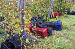 Kisten aus den Grund in einem Weinberg rudern in Bulgarien Lizenzfreie Stockbilder