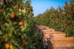 Kisten in einem Apfelgarten stockfotografie