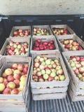 9 Kisten kürzlich geerntete Äpfel lizenzfreie stockfotografie